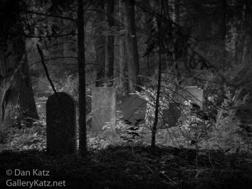 Forested Graves Berlin Cemetery BW
