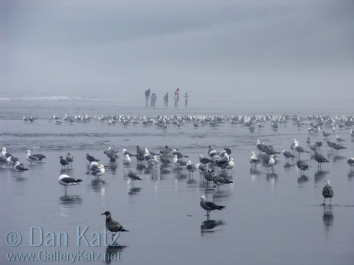 Gulls and family
