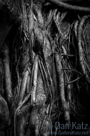 Hanging Roots Maui