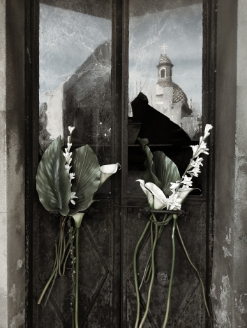 Palms, Lilies and Broken Panes