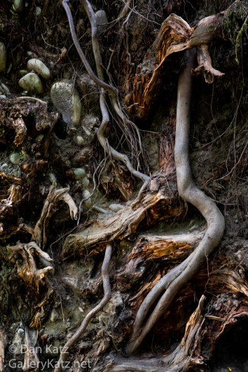 Roots and Rocks Hoh Rain Forest WA
